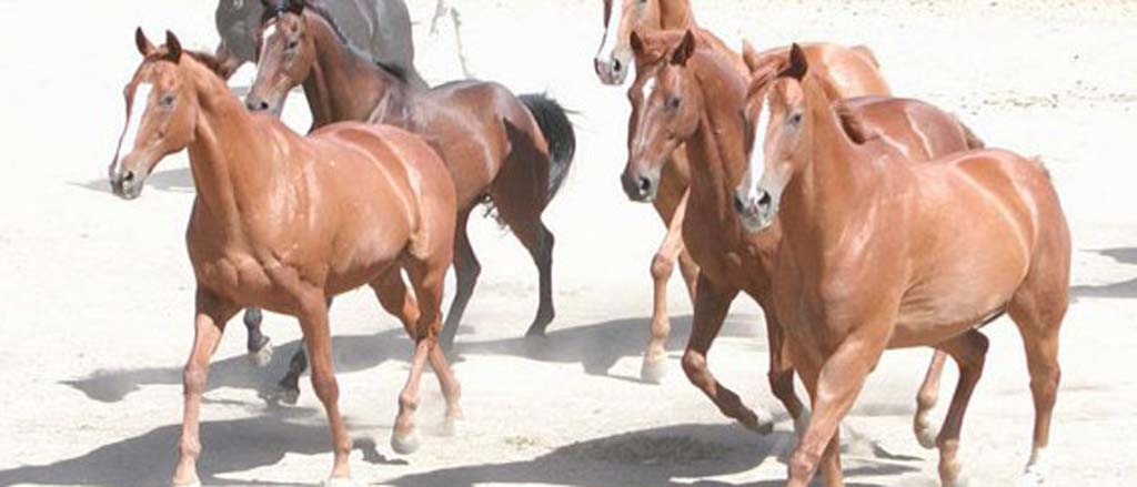Treatment of retired racehorses spurs foundation's growth