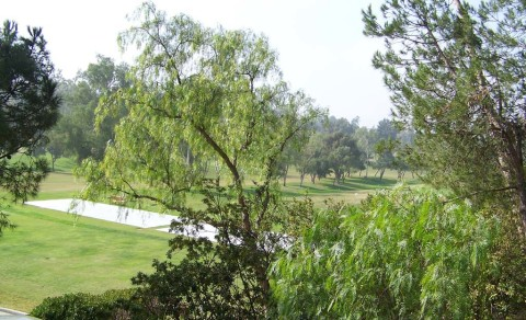 Golf course tree plan to be revealed