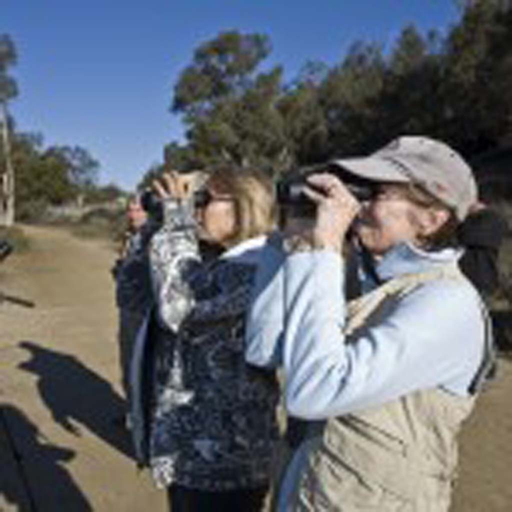 Leucadia resident Patti Gollong uses binoculars to scan for wildlife at the Bataquitos Lagoon. Photo by Daniel Knighton
