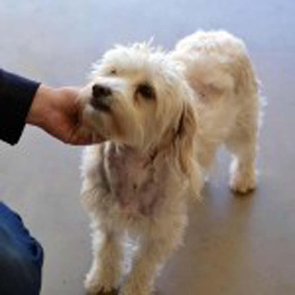 HWAC dog Sophie-1 lr