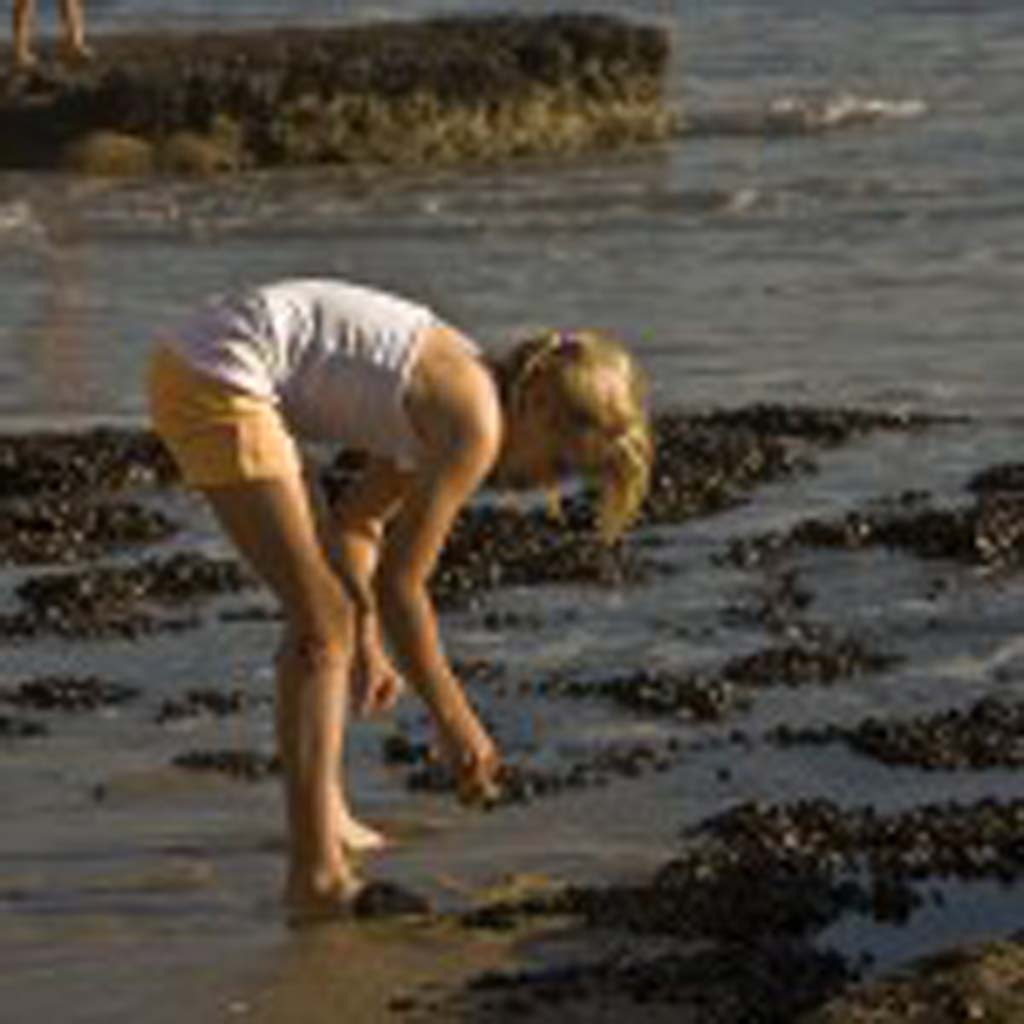 11-year old Rancho Bernardo resident Nicole Tesar searches for anemones and crabs in the tide pools at Swami's. Photo by Daniel Knighton