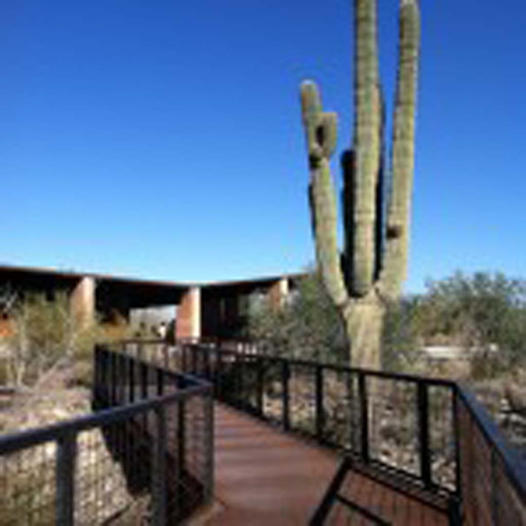 A giant saguaro cactus marks the Gateway entrance to the McDowell Sonoran Preserve in Scottsdale. It is popular because of the ramada (shade structure), restrooms, parking and information/nature center that are available. (Photo by E'Louise Ondash)