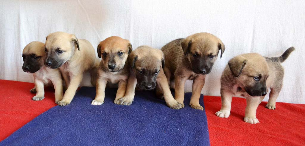 """Patriot Puppies,"" named Glory, Justice, Freedom, Stars, Stripes and Valor celebrate a renewed chance at life, liberty and happiness at Helen Woodward Animal Center. Courtesy photo"
