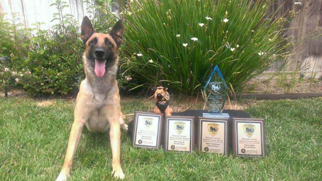 Oceanside police wins big in canine competition