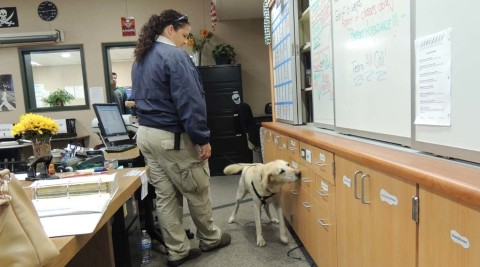 Oceanside schools fight contraband with canines