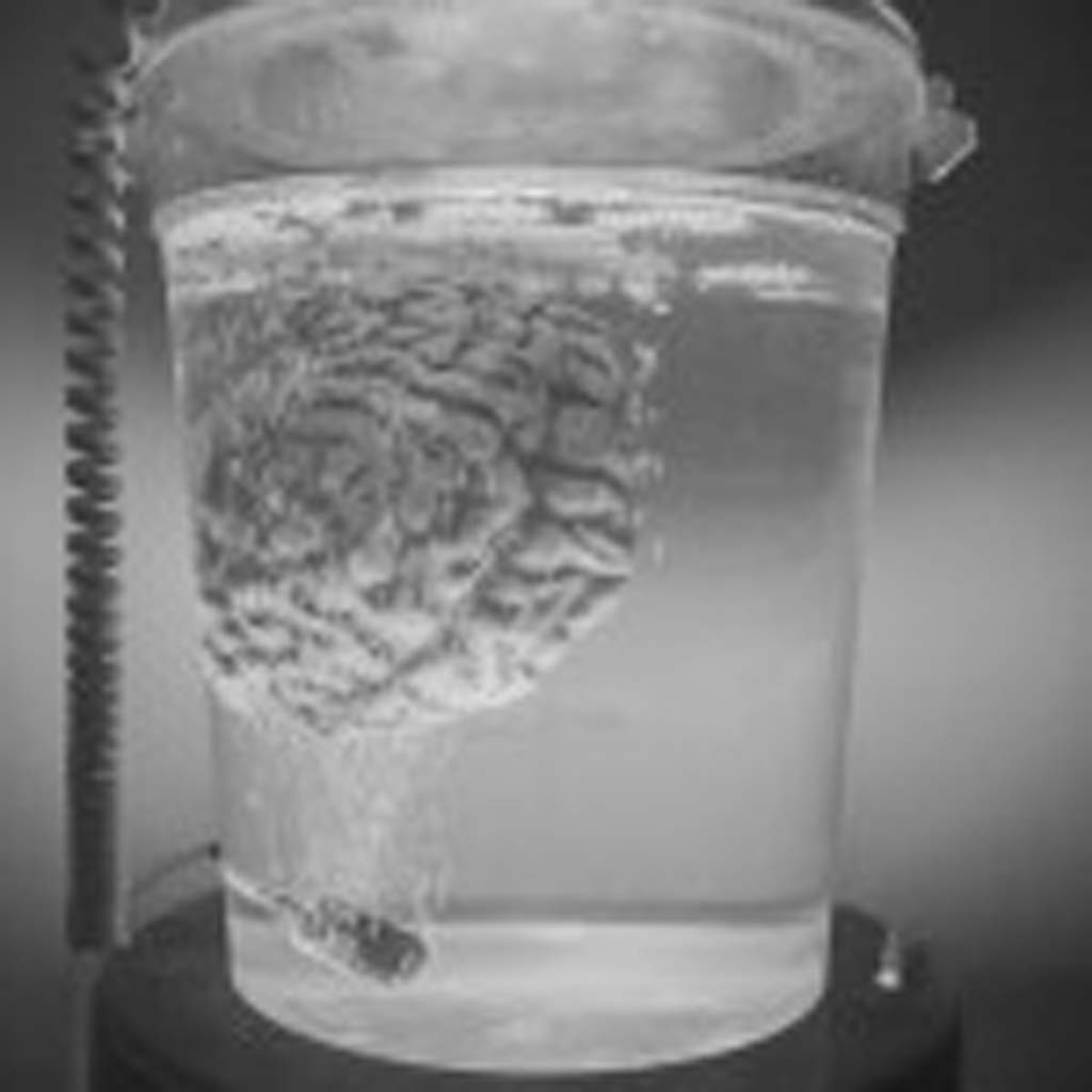 A brain waits to be implanted in Dr. Frankenstein's monster at the Haunted Hotel. Photo by Daniel Knighton