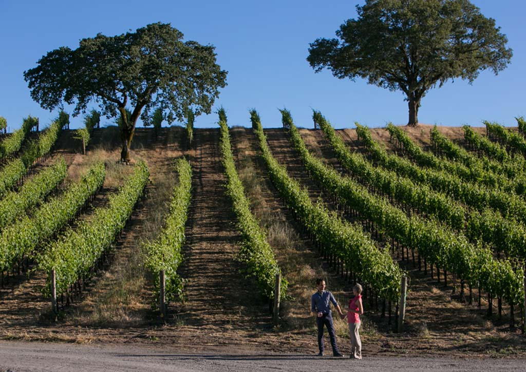 The 2013 California wine crop has excellent quality as growers cut back some on production in favor of quality.  Shown here is the Jordan Vineyard in Sonoma. Photo courtesy of Jordan Vineyard