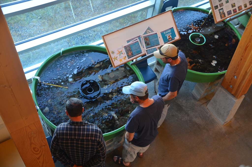 Touch tanks at the Deep Bay Marine Field Station give visitors a chance to get up-close and personal with the area's marine life.
