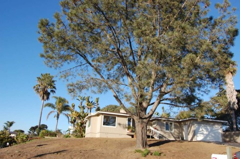 Request to halt tree removal permits fails to take root