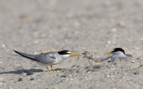 Migrating birds starting to reach warmer temps