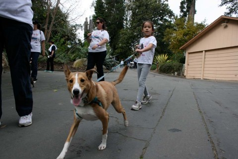 5k Paw Walk proves to be tail-wagging fun