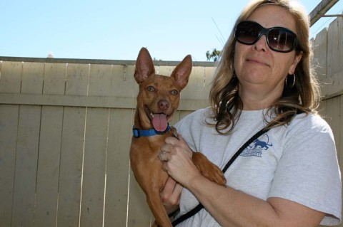 Animal safehouse for pets of domestic violence victims