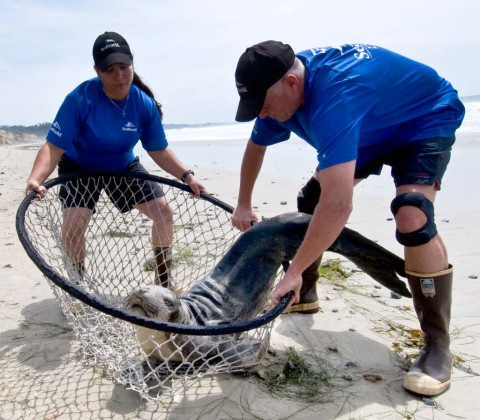 SeaWorld crews busy with marine mammal rescue calls last weekend