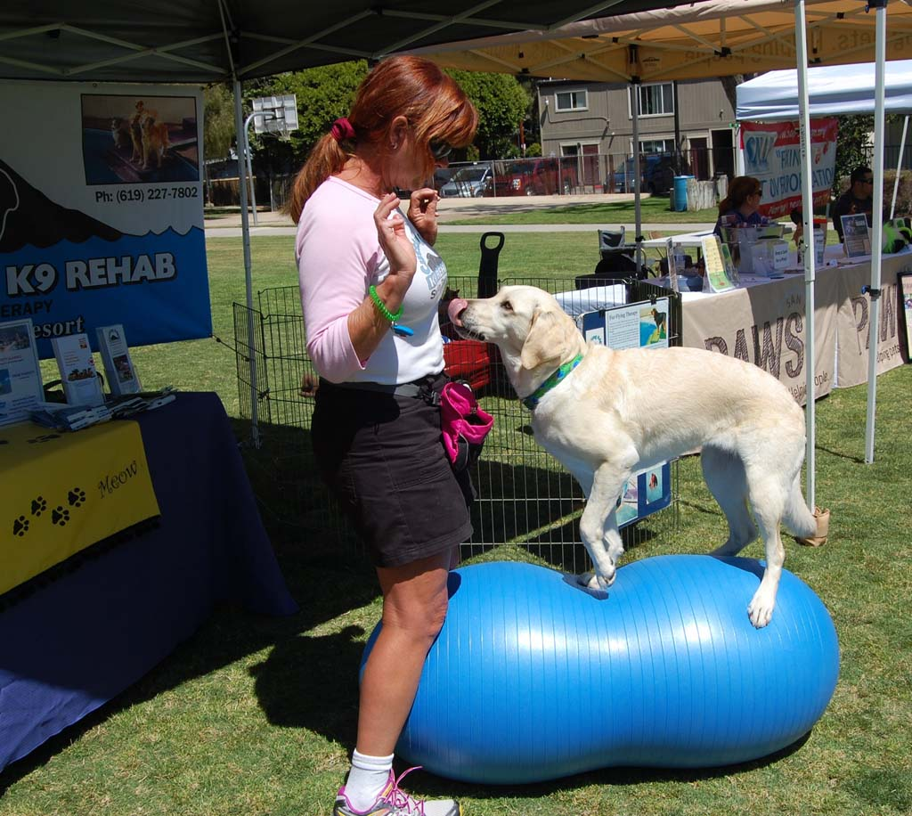 Tori, a 3-year-old yellow Labrador retriever, shows off an agility move with Trish Penick from Cutting Edge K9 Rehab. Photo by Bianca Kaplanek