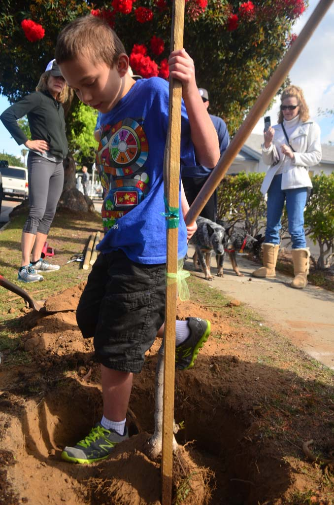 Jakob Ugrob, 8, stomps down on some dirt where a tree was planted during an Arbor Day celebration. Photo by Tony Cagala