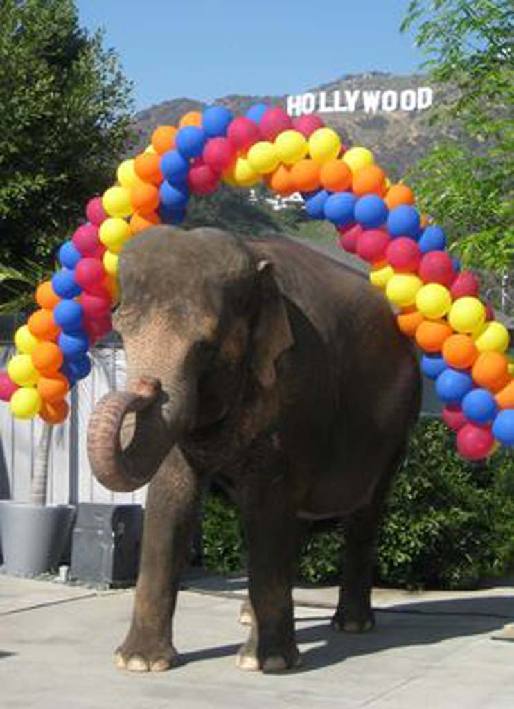 Elephant rides won't return to 2014 county fair
