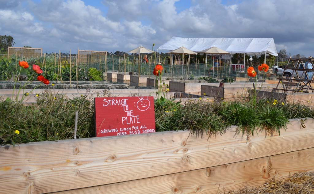 Encinitas considers ways to grow urban agriculture