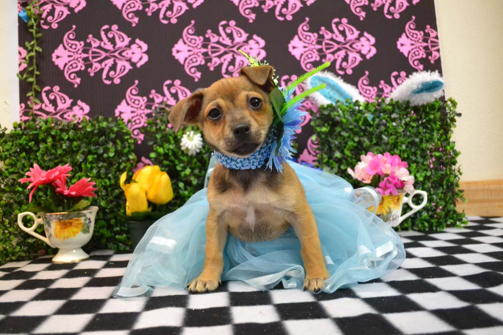 Countdown: Helen Woodard Animal Center 26th Annual Spring Fling Gala