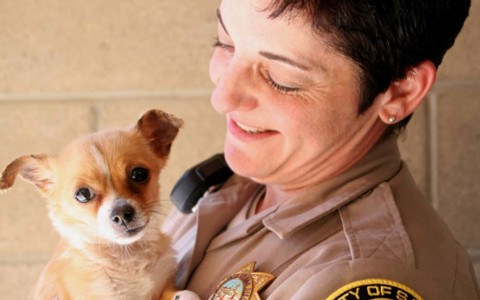 County using new app to id lost dogs