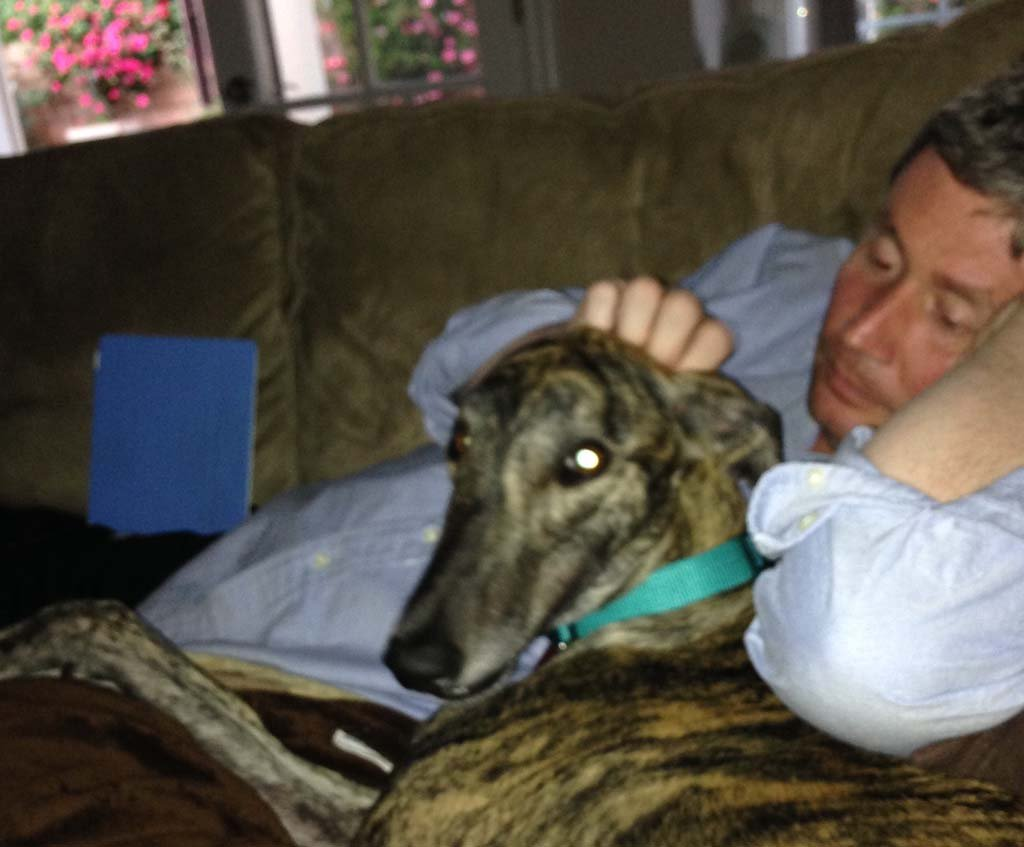 Song helps get lost greyhound back home