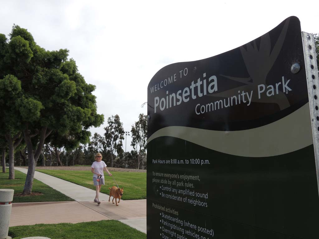 Some residents in Carlsbad are calling for a dog park to be established in the city's Poinsettia Community Park. Photo by Rachel Stine