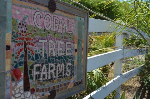 Coral Tree Farm claims 'partial victory' following city's ruling