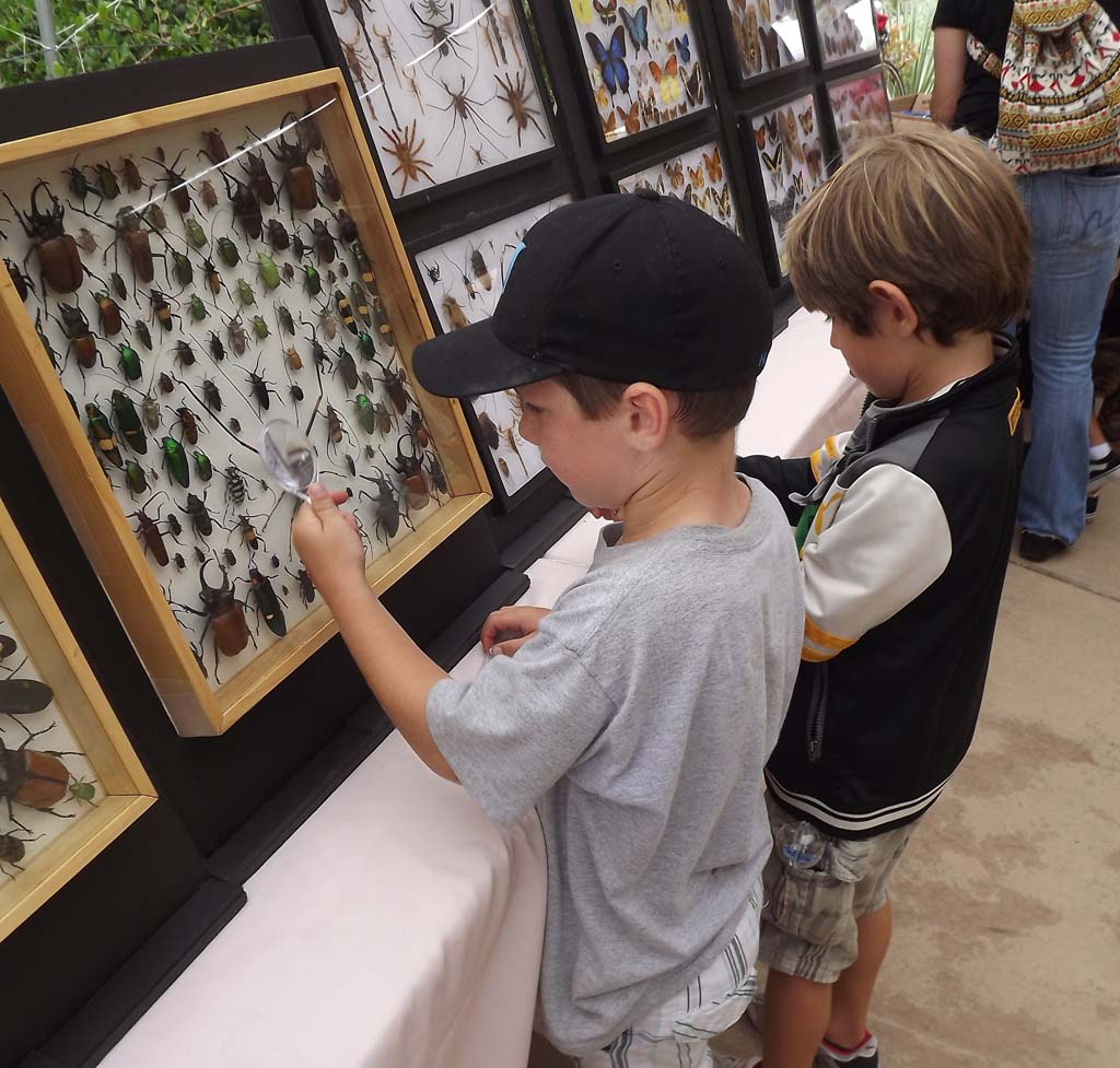 Get in touch with creepy crawlers at insect festival