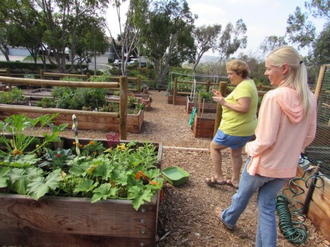 Community gardens are 'microcosm of the community'