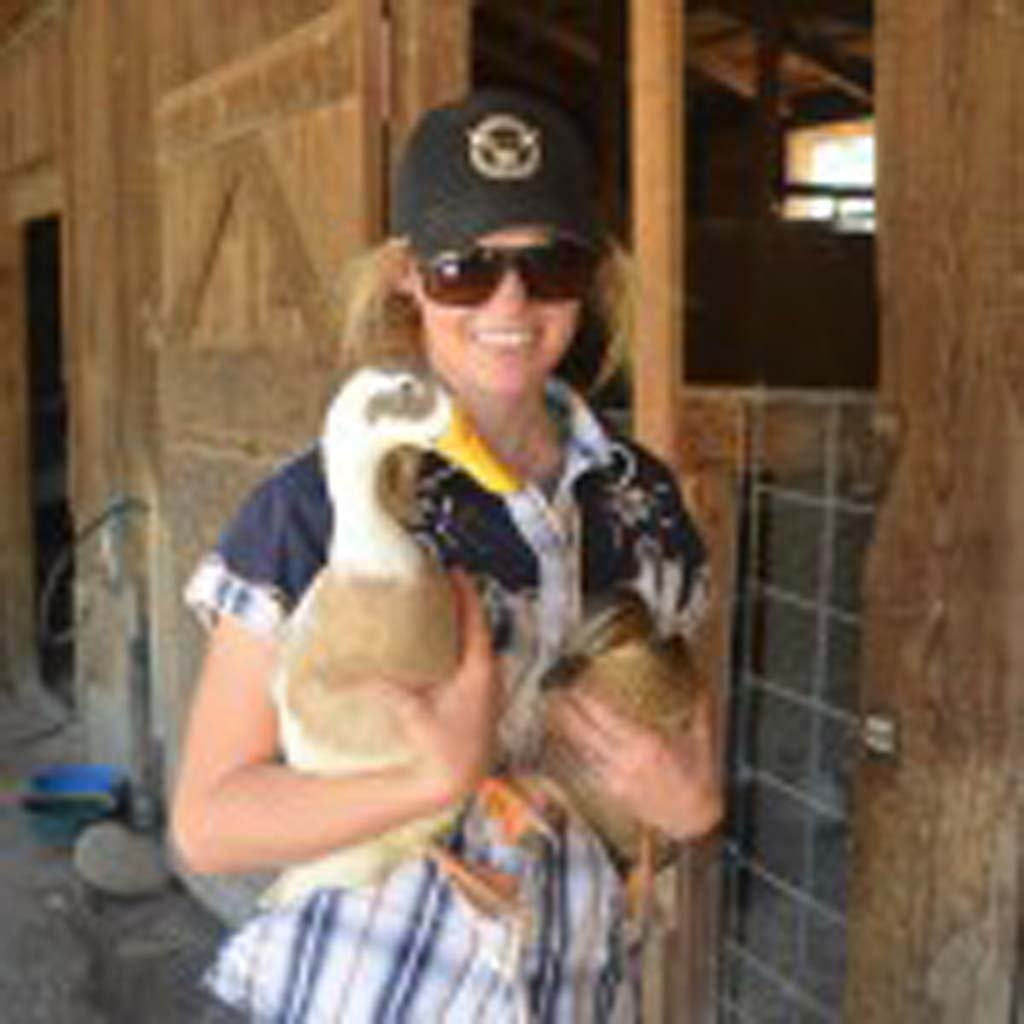 Elizabeth Swanson works with the many animals that reside in the petting zoo at Alisal Guest Ranch and Resort near Solvang. All of the animals are rescues. Children who stay at the resort are invited to feed the animals and gather eggs daily. (Photo by Jerry Ondash)