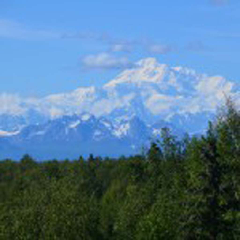 With luck and timing, this is the view of Mount McKinley (Denali) that visitors see as they approach the town of Talkeetna, a two-and-a-half hour drive north of Anchorage. At 20,320 feet, the mountain is the highest peak in North America. At this point on the road, visitors are actually closer to the mountain than at the entrance to Denali National Park, another 150 miles north of Talkeetna.