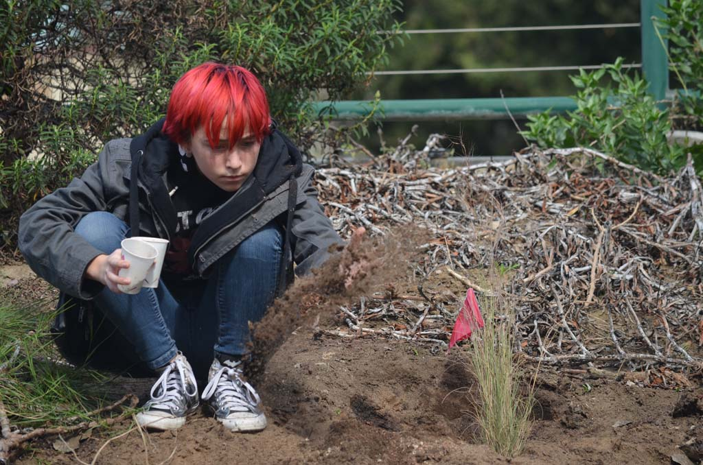 San Dieguito Academy student Veronica Ness drops some native seeds at Cottonwood Creek. Photo by Tony Cagala