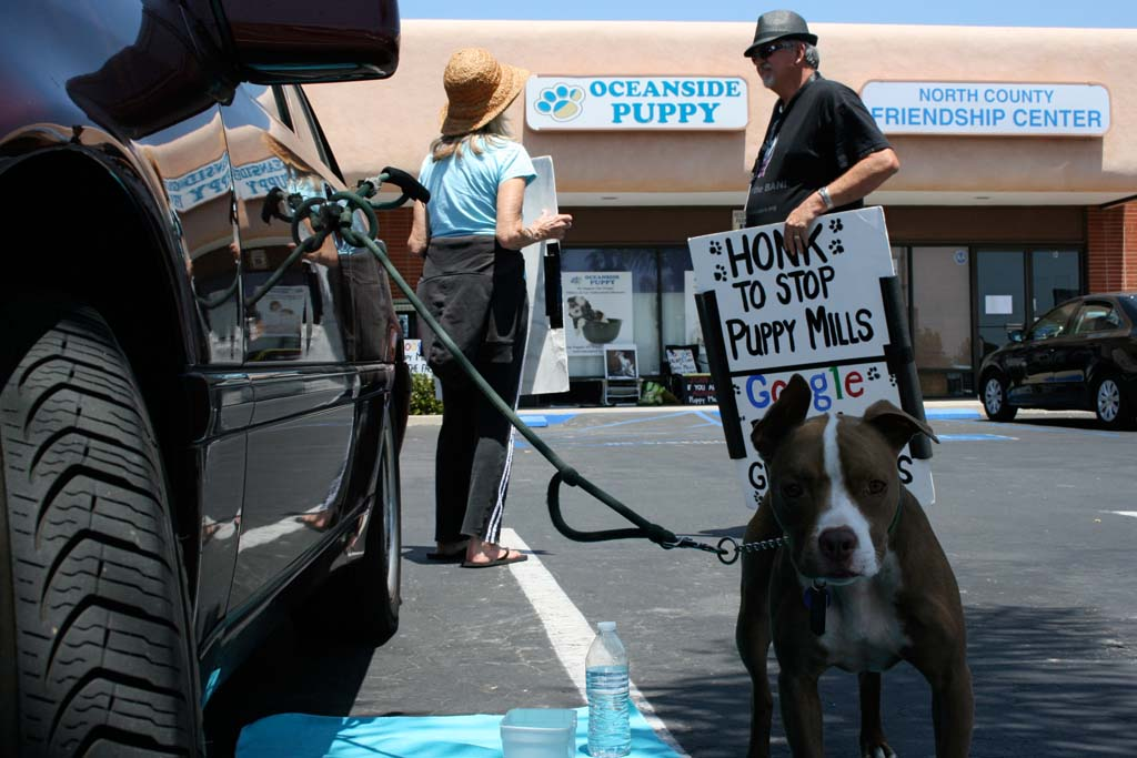 Protestors against puppy mills have been outside of Oceanside Puppy since it opened. The City Council gave direction to draft an ordinance banning puppy mills at its Dec. 3 meeting. File photo by Promise Yee