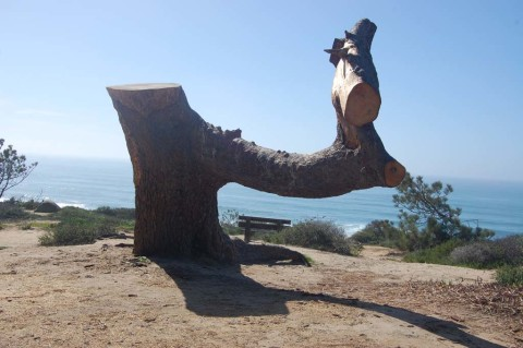 Tree stump to be carved into public art