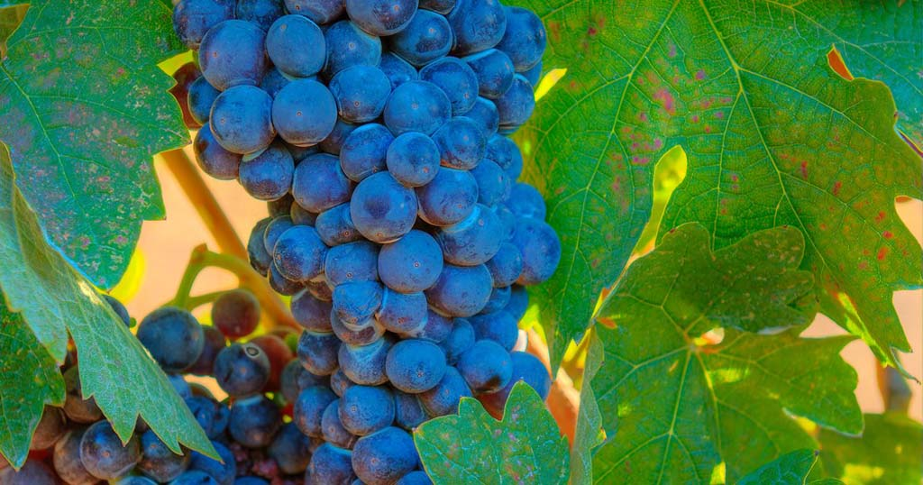 Taste of Wine: Mixing it up with wine blending