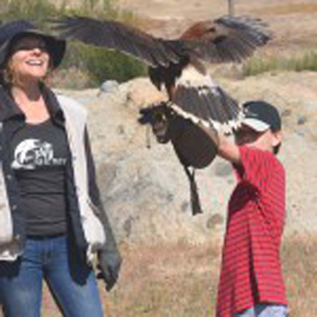 Carlsbad resident David Ondash, 8, takes instruction from Denise Disharoon, on how to provide a perch for Hayduke, a Harris's hawk that resides at Sky Falconry in Alpine. Photos by Jerry Ondash