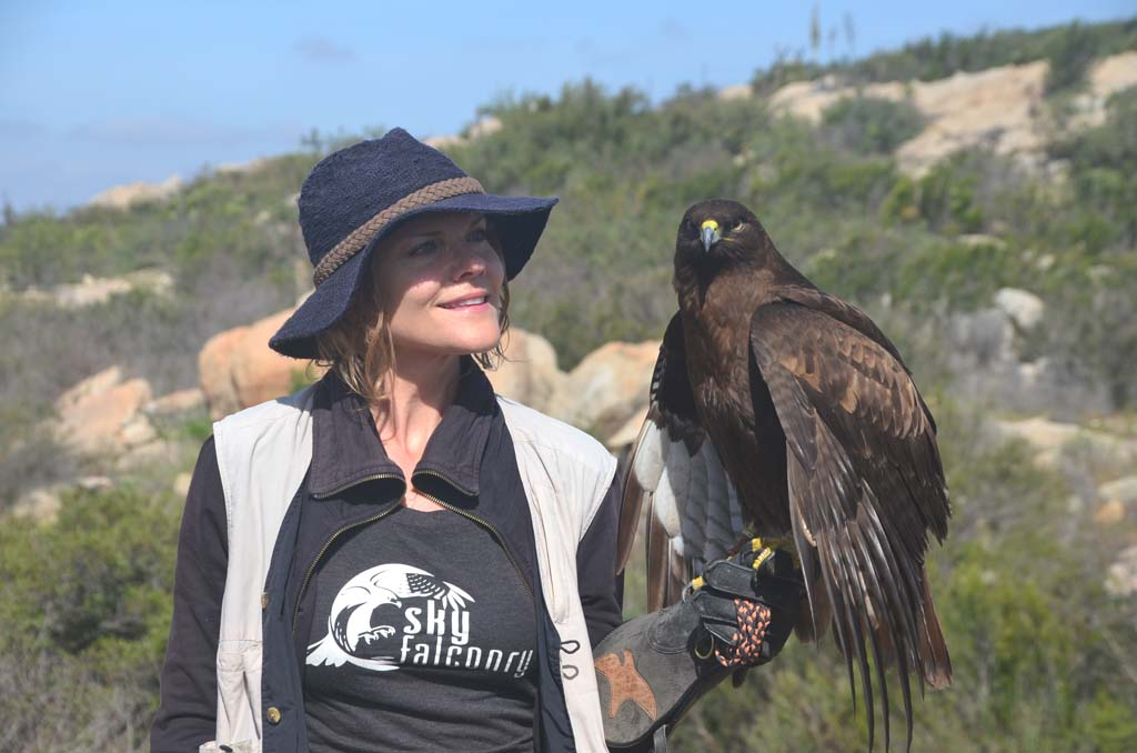 Denise Disharoon, a falconer and co-owner of Sky Falconry in Alpine, introduces Ananda, a young red-tailed hawk, during an hour lesson on raptors and their use for hunting.