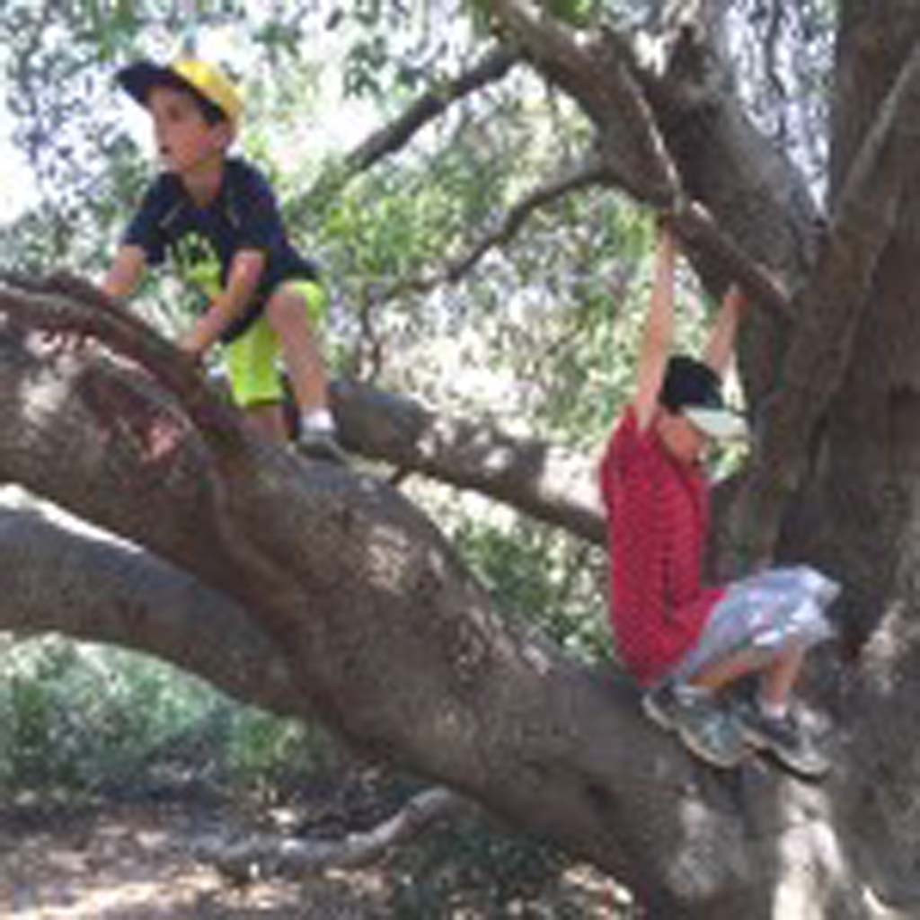 A large and aged oak tree at Mission Trails Regional Park in East County becomes a play structure for Carlsbad cousins David Ondash and Jordan Barnhart, both 8 years old. The tree can be found on the 1.4-mile Visitor Center Loop.