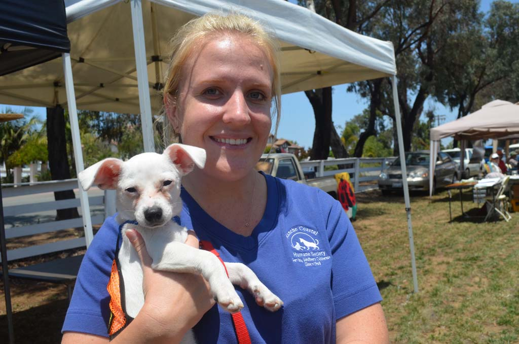 Kelly Peters of the Rancho Coastal Humane Society with Milo, a 2-month-old dacshsund-Jack Russell Terrier mix who is part of the foster care program and is available for adoption. Photo by Tony Cagala