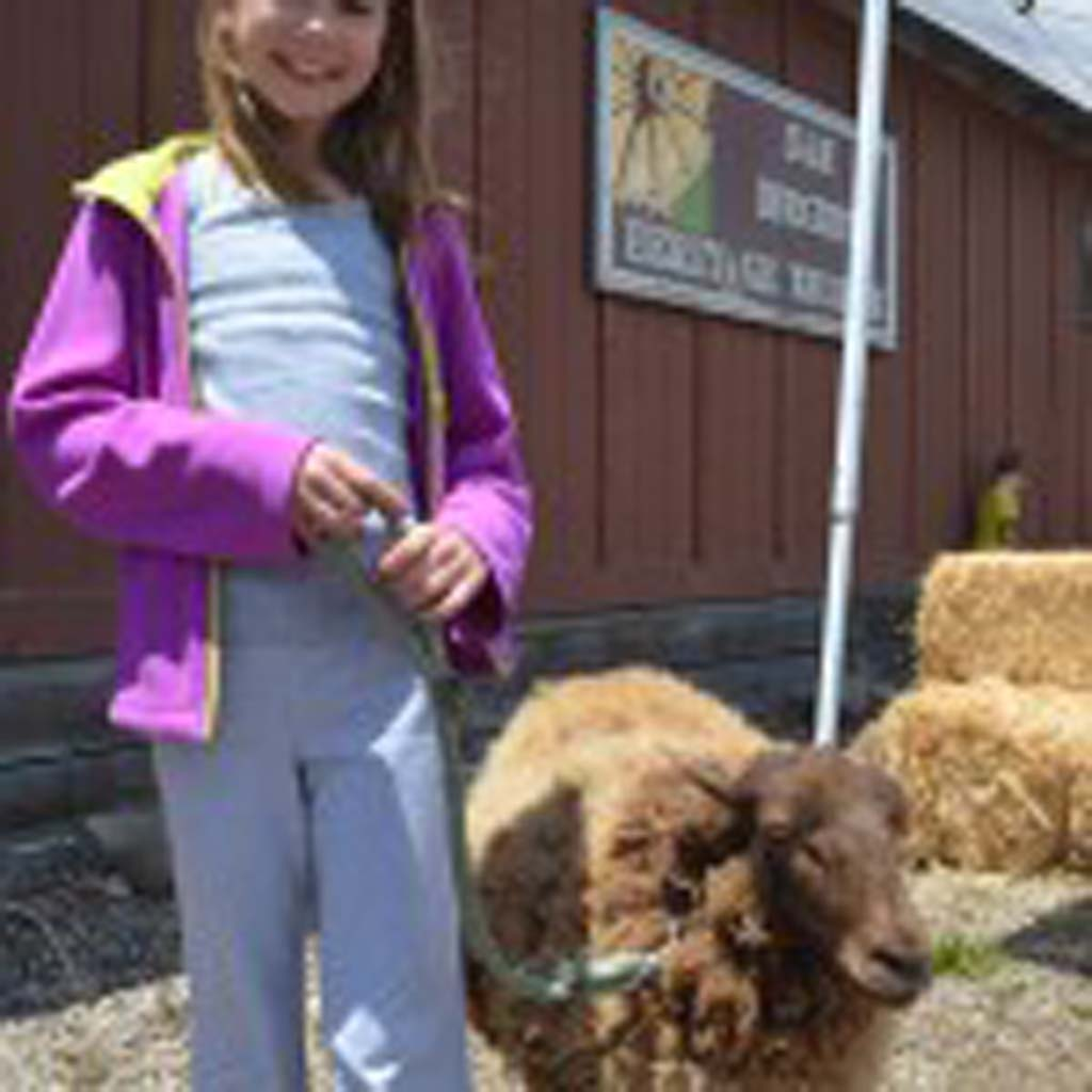 Brianna Jordan leads around a Shetland sheep at the petting zoo at the San Dieguito Heritage Museum. Photo by Tony Cagala