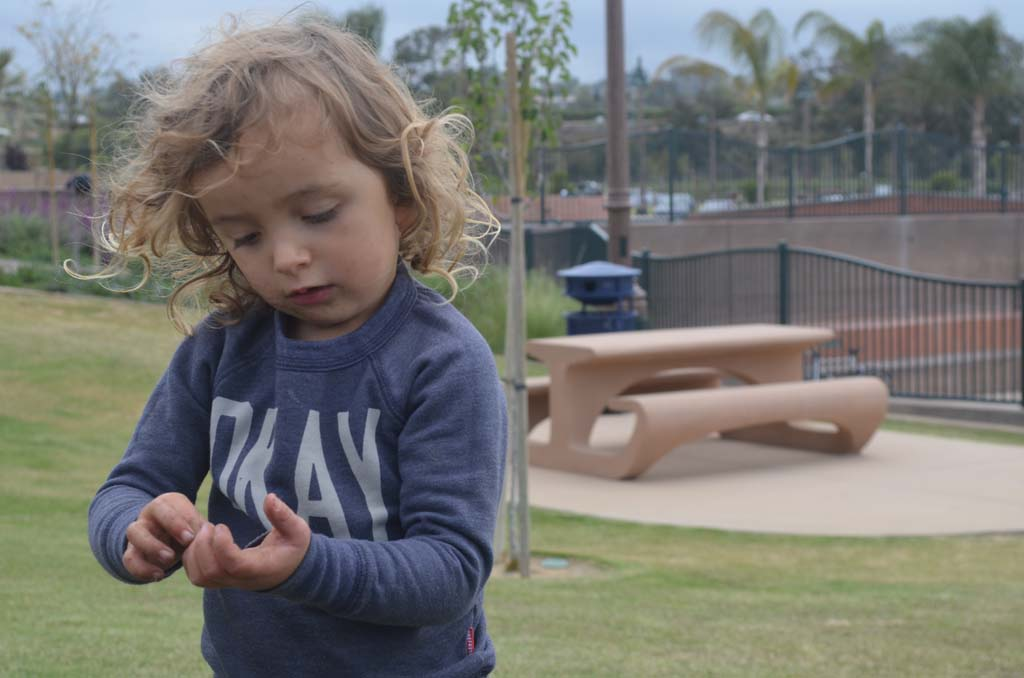 Kai Usher examines an earthworm found while helping to plant a tree at the Encinitas Community Park. Photo by Tony Cagala