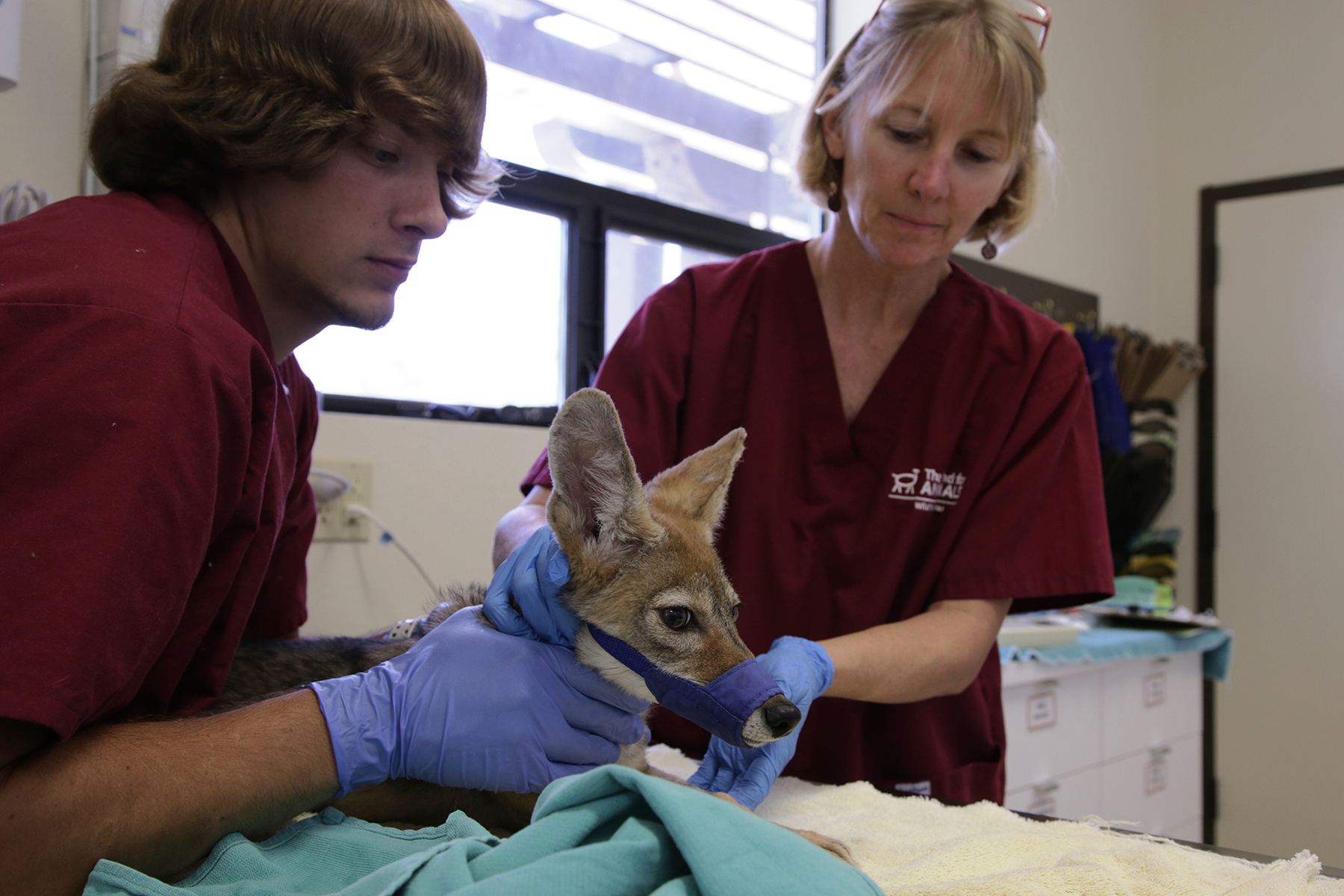 Animal rescue series nominated for Emmys