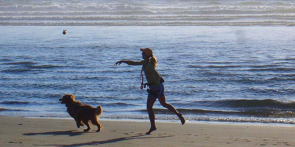 A dog about to chase after a toy that was just thrown by the dogs owner. Photo by Melissa Doroquez courtesy of WikiMedia
