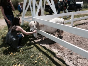 A petting zoo with this miniature horse is part of Winding River Resort, near the town of Grand Lake. The property borders the Colorado River and Rocky Mountain National Park. The resort offers camping and rental cabins, trail rides, hay rides, pony rides and chuck wagon breakfasts.