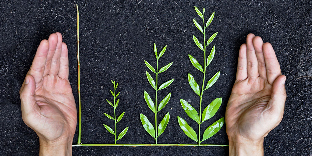 Hand holding tree arranged as a green graph on soil background / csr / sustainable development / planting a tree / corporate social responsibility. Stock photo