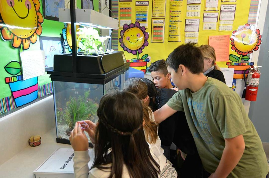 Students at a San Diego County school observe one of nature's cycles through an ECO-CYCLE kit. The kits are from the Escondido-based nonprofit ECOLIFE. Photo by Mike Ready