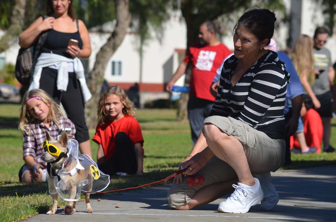 Onlookers watch the Chihuahua costume contest. Photo by Tony Cagala