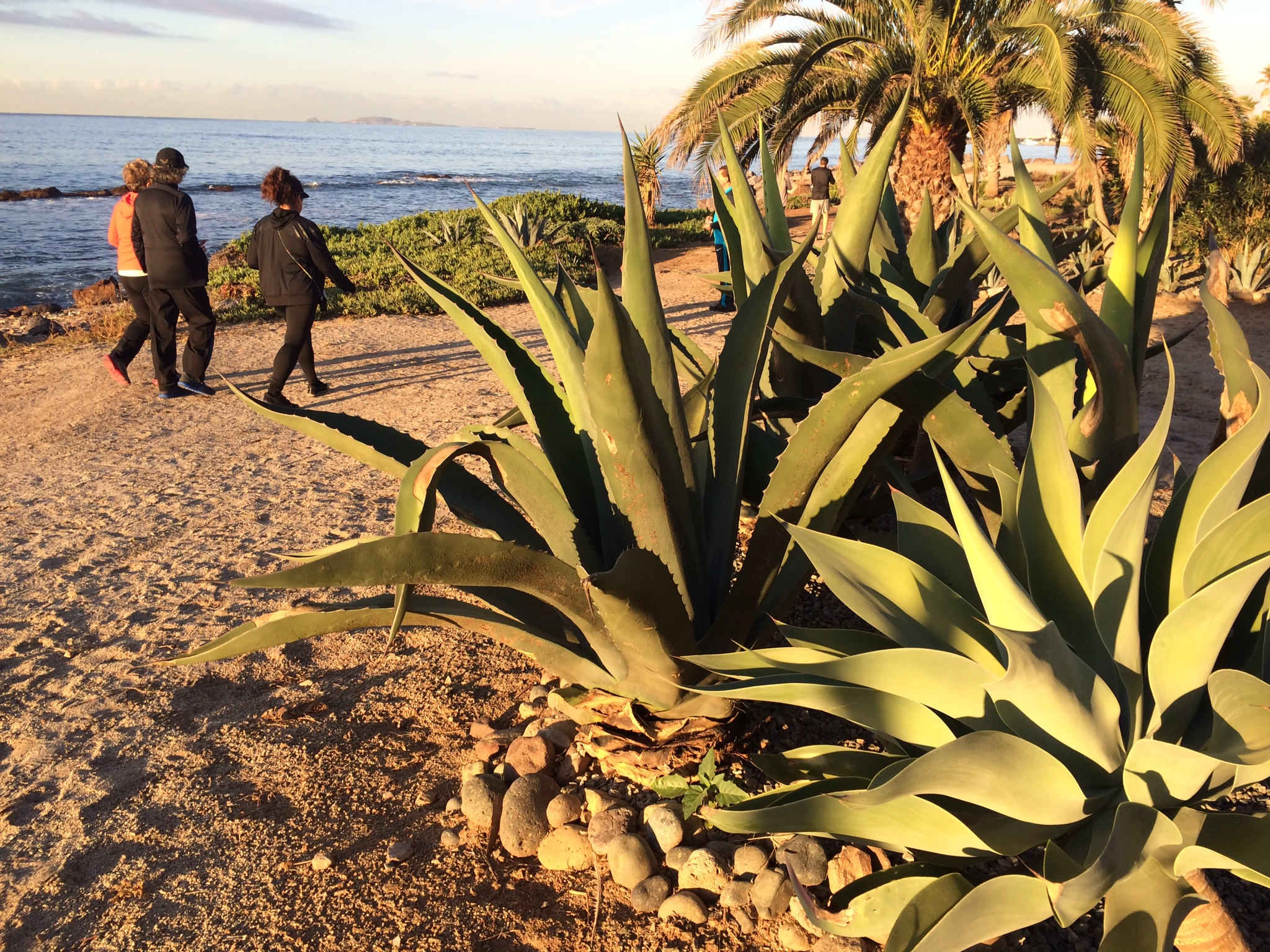 Scenic and serene morning walks along the water are part of the new wellness program at Hotel Coral near Ensenada, which will be offered several times in 2016. Photo by E'Louise Ondash