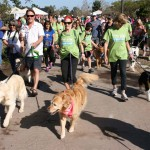 Dogs and owners start the 5k. The annual walk in San Diego Botanic Garden draws over 200 dogs and 350 people. Photo by Promise Yee