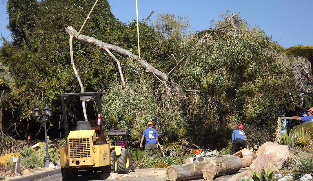 Crews clean up Botanic Garden after weekend storm