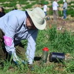 A volunteer participates in the edible forest planting event on Jan. 24. Photo by Tony Cagala